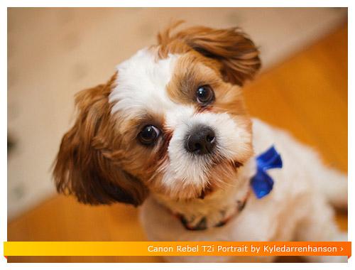 Canon Rebel T2i - Dog Portrait