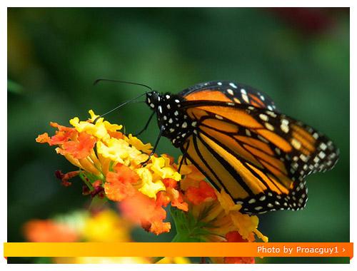 Fuji HS10 Macro - Butterfly