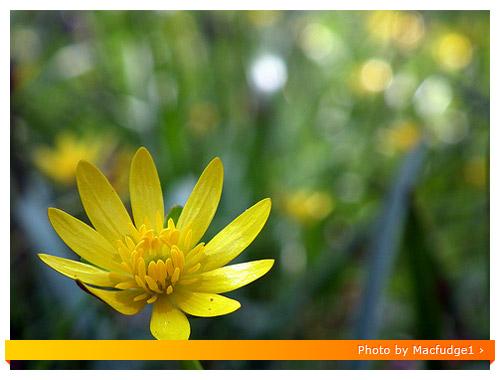 Fuji HS10 Macro - Flower
