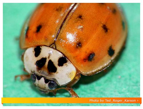 Fuji HS10 Macro - Ladybug